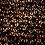 Lessen uit New York: Een school met 450 roosters